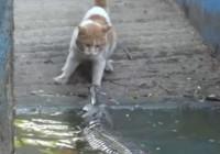 """猫咪大战鳄鱼 持续""""两巴掌""""扇向鳄鱼"""