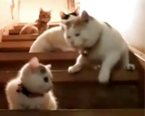 在楼梯上玩的猫咪一家